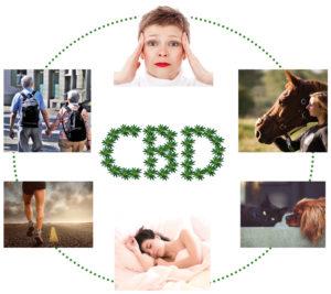 CBD Öl für Mensch und Tier