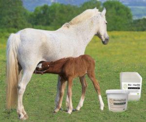 Hochwertige Futterergänzung für Pferde